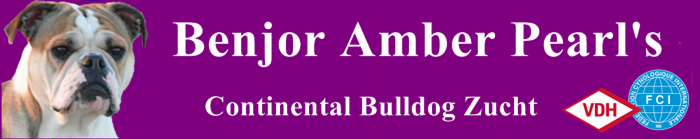 Continental Bulldog Züchter - Bonjour Amber Pearl's
