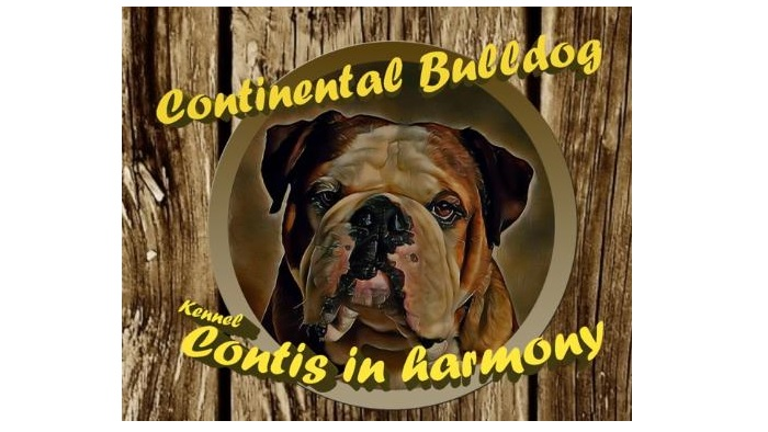 Continental Bulldog Züchter - Contis in harmony