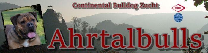 Continental Bulldog Züchter - Ahrtalbulls