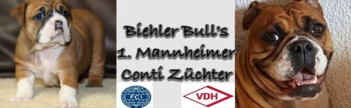 Continental Bulldog Züchter - Biehler Bulls