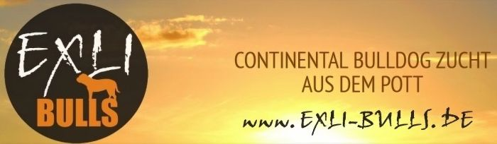 Continental Bulldog Züchter - Exil-Bulls