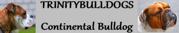 Continental Bulldog Züchter - Trinitybulldogs